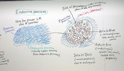 Function of pancreas