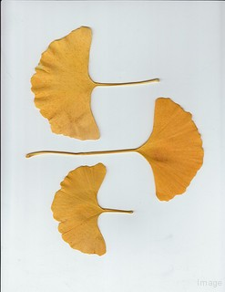 Edema treatment - ginkgo biloba